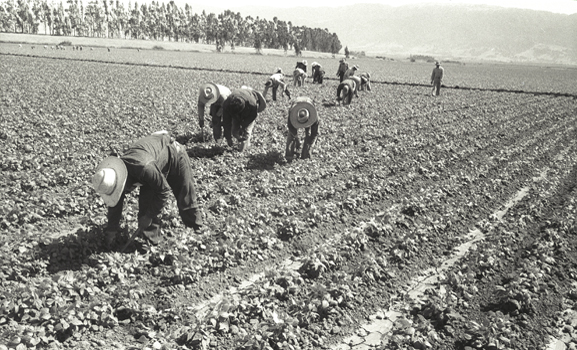 Bracero Working In Fields Leonard Nadel 1956